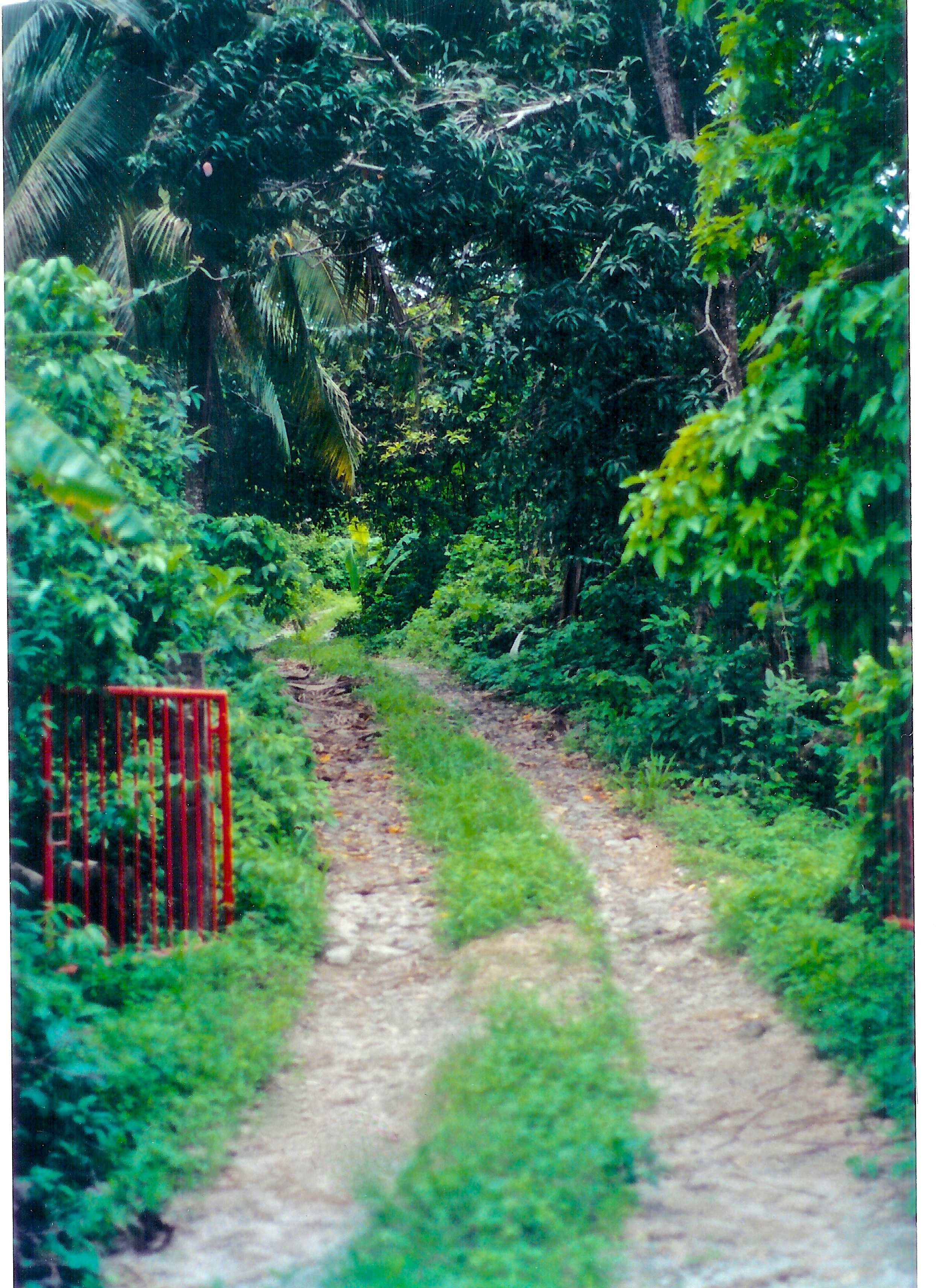 Jungle gate vegetation