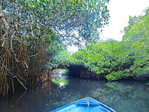 Tovara mangrove tunnels