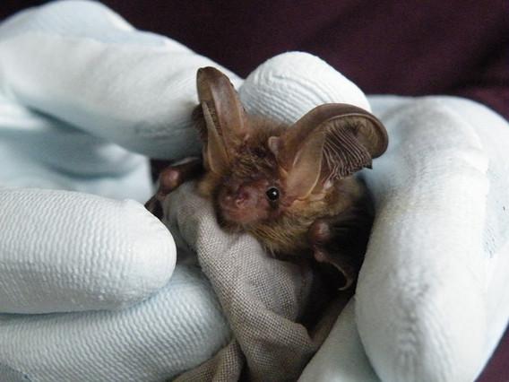 Bat in hand.jpg