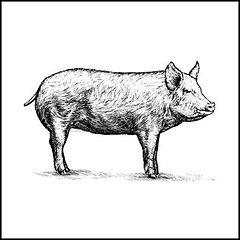 pig (1).jpg