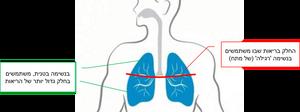 תרגיל נשימה להפחתת מתח