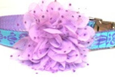 Lavender Brocade Dog Collar with Dog Collar Accessory starting at $25
