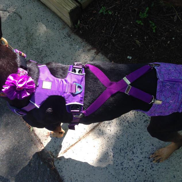 Dog Diaper and Suspender