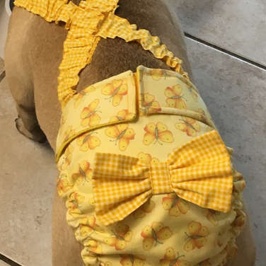 French Bulldog Dog Diapers