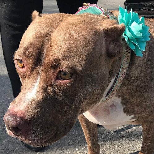 "1.5"" Medallion Dog Collar"