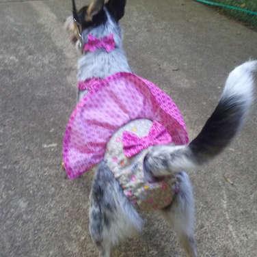 Washable Dog Diapers Female Heat