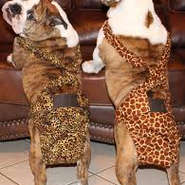 Dog Diapers Diapers For Dogs Dog Britches Dog Pants Fancynancys