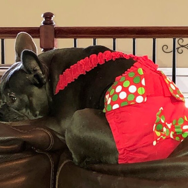 French Bulldog Christmas Dog Diapers Panties Britches Pants for Dogs