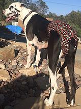 Great Dane Irish Wolfhound Mastiff Dog Diapers Panties Britches