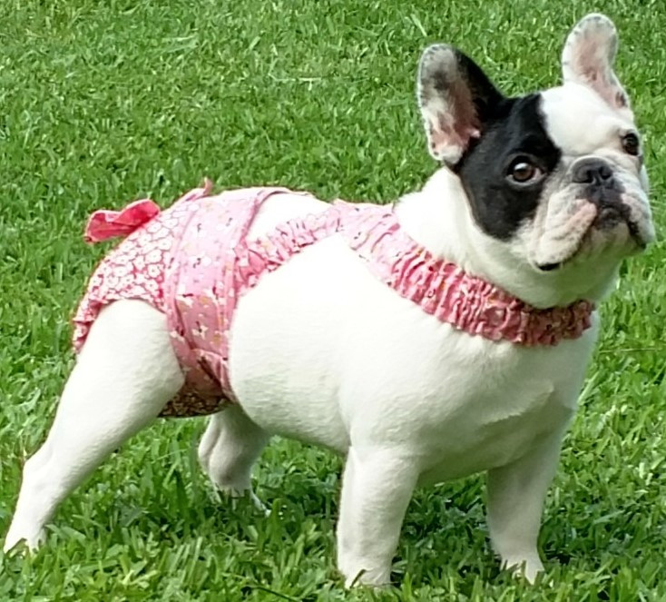 Washable French Bulldog Diapers Panties Britches