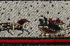 Gilded Christmas Presents Ho! Ho! Ho! Dog Collar