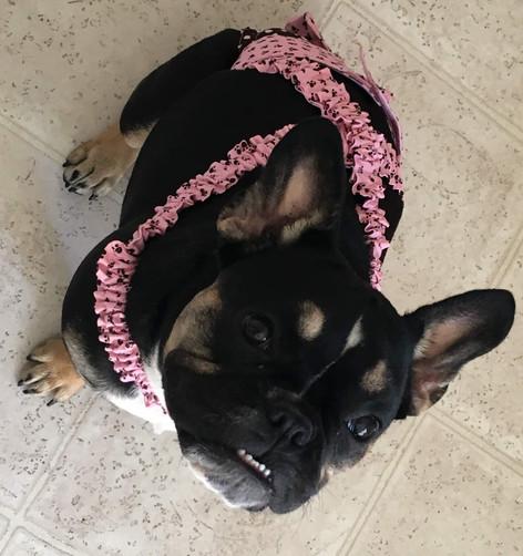 Bulldog Dog Diaper Panties Britches