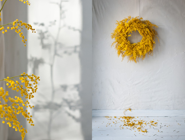 Botanical chain of lights - Mimosa