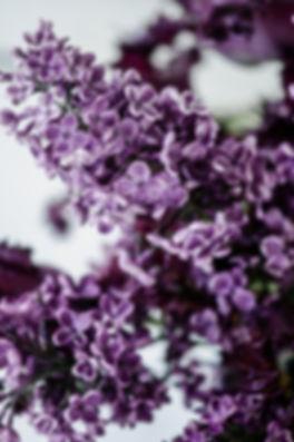Lilac_Macro4.jpg
