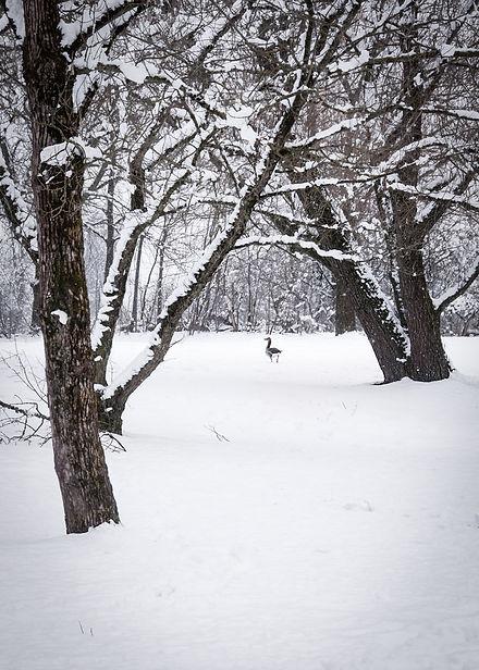 Calendar_snow.jpg