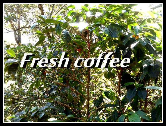 Orphan Blend Coffee - From Honduras