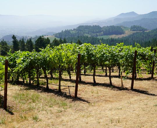 Vineyards Napa Valley.JPG
