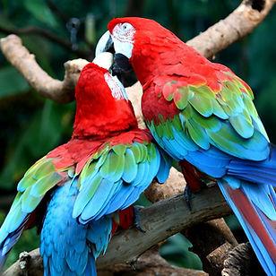 penang bird park.jpg