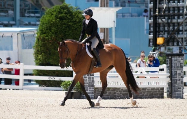 Horseshows Are Back!