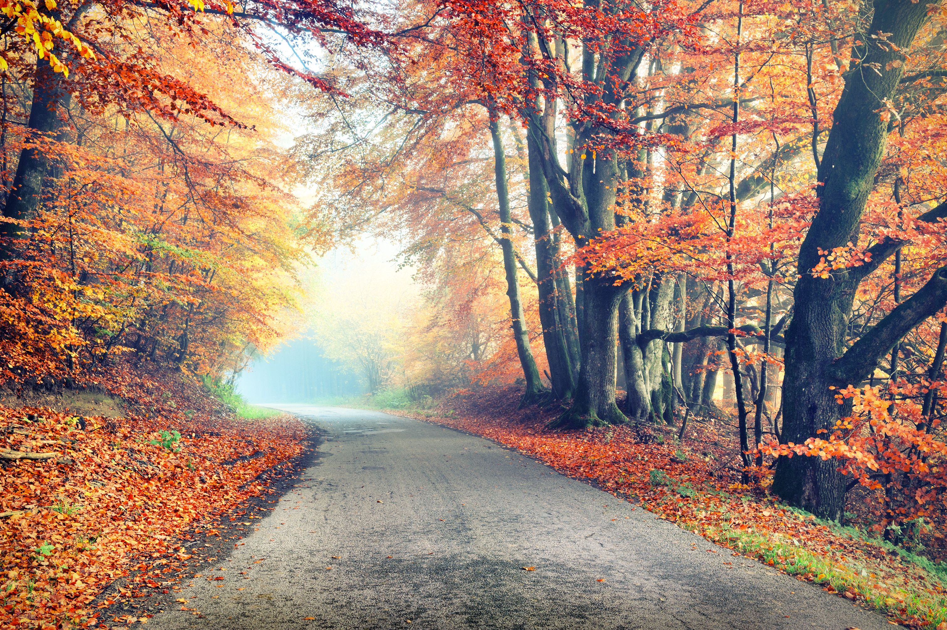 Autumn landscape with country road in or