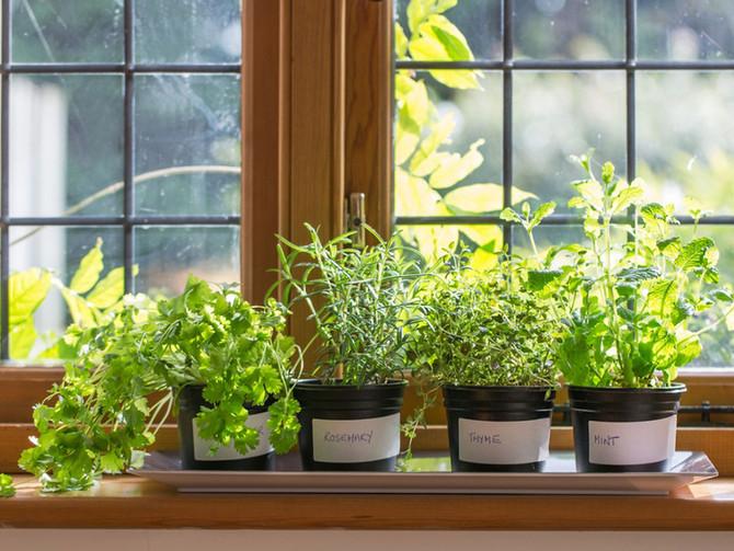 """Βότανα και φυτά που """"καθαρίζουν"""" τον οργανισμό"""