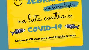 O Zebrafish na luta contra o COVID-19