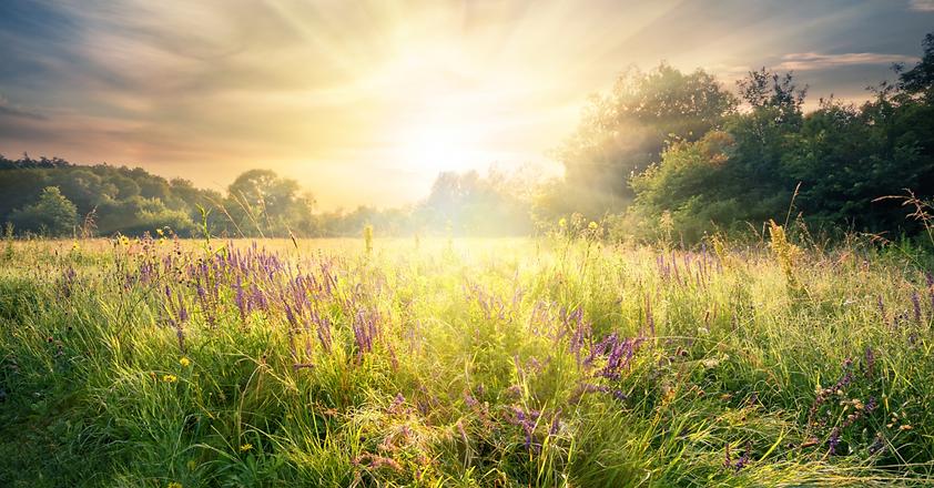 68077-field-flowers-sunlight-peace-getty