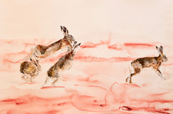 Running Hares