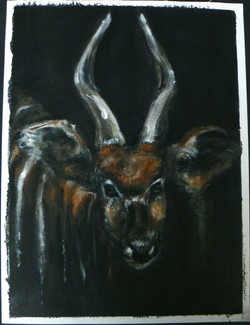 """Bongo Antelope"""
