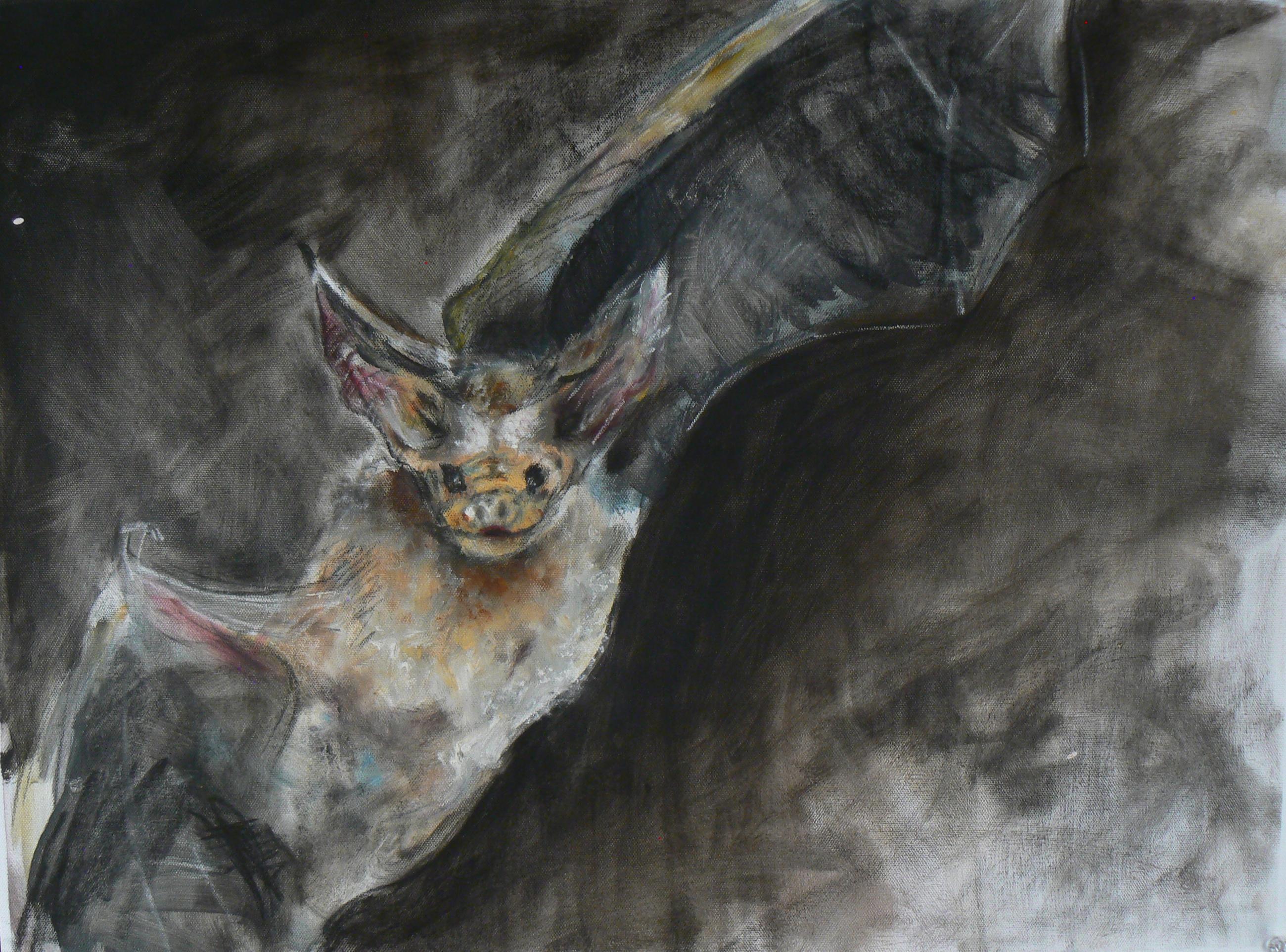 """""""Pallid Bat"""""""