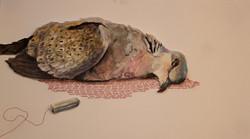 Sacrifice of a Turtle Dove