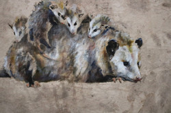 Opossum & Young (Detail)