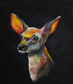 Fawn Study
