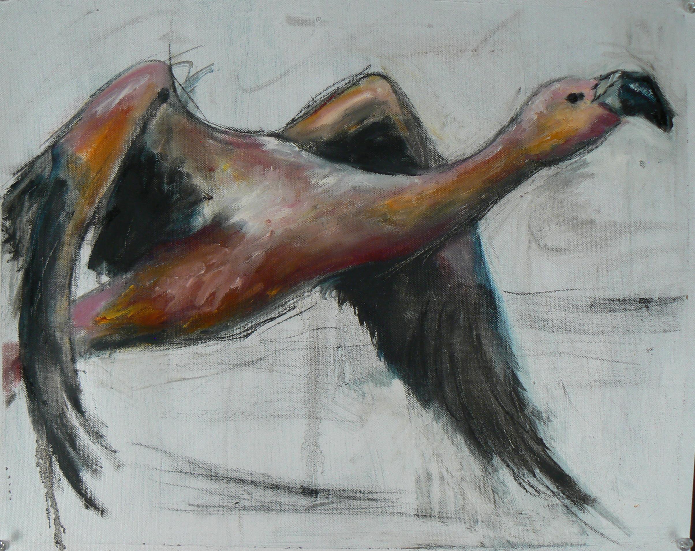 """""""Andean Flamingo"""""""