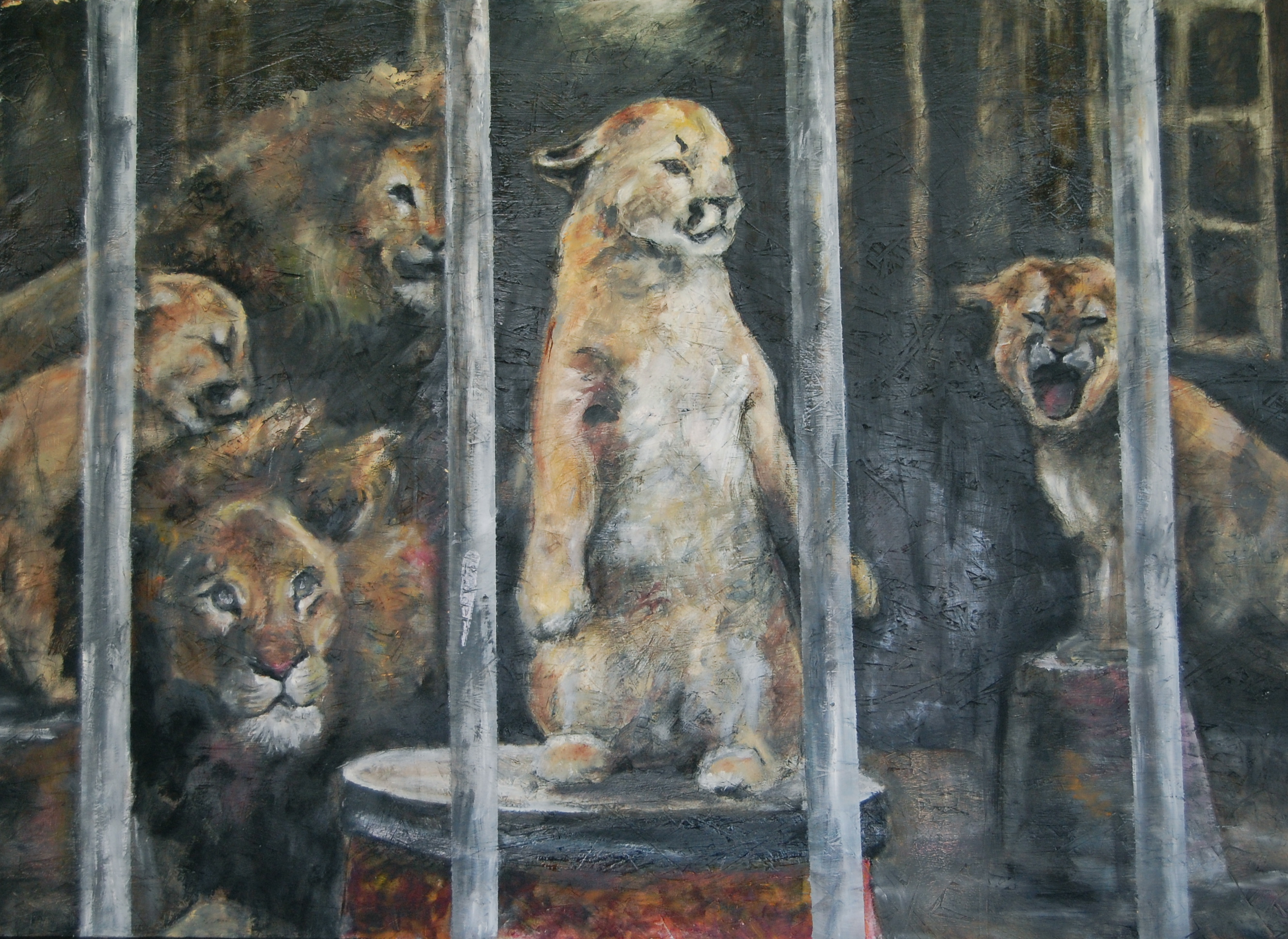 """African and Mountain Lion Circus"""