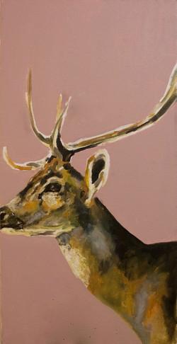 Male Chital Deer
