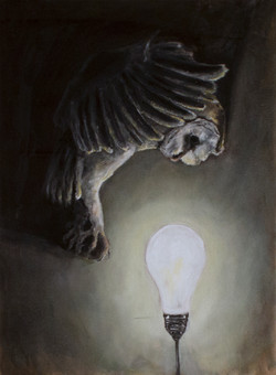 """Barn Owl and Lightbulb"""