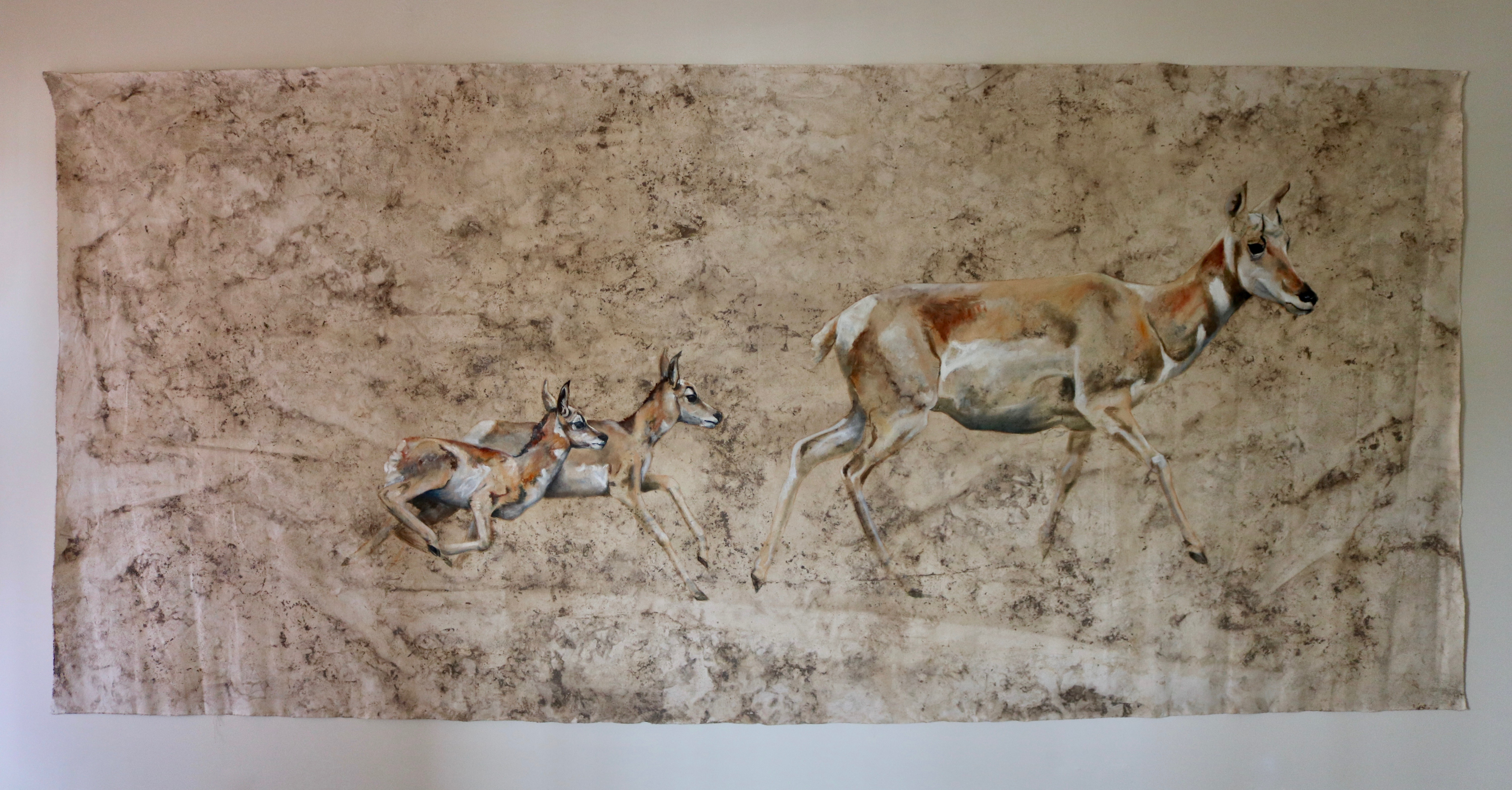 Pronghorn & Fawns