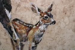 Columbian Blacktail Deer (Detail)