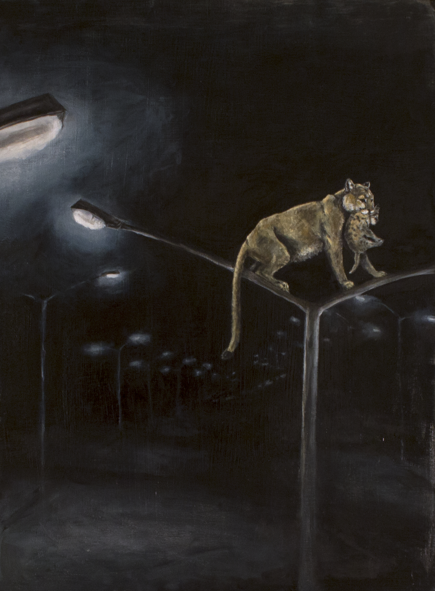 """Mountain Lions and Street Lights"""