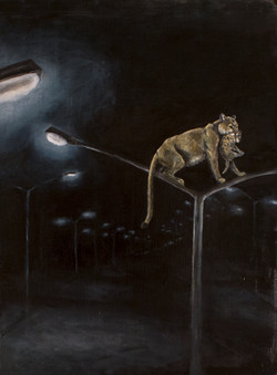 Mountain Lions with Streetlights""