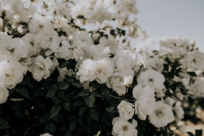 floral-shot.jpg
