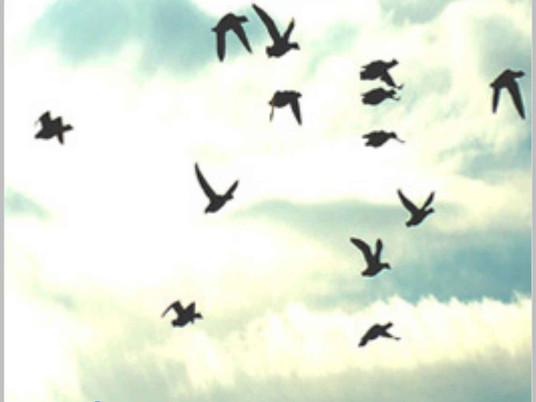 Les mots sont des oiseaux