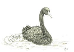 Black Swan with Four Cygnets