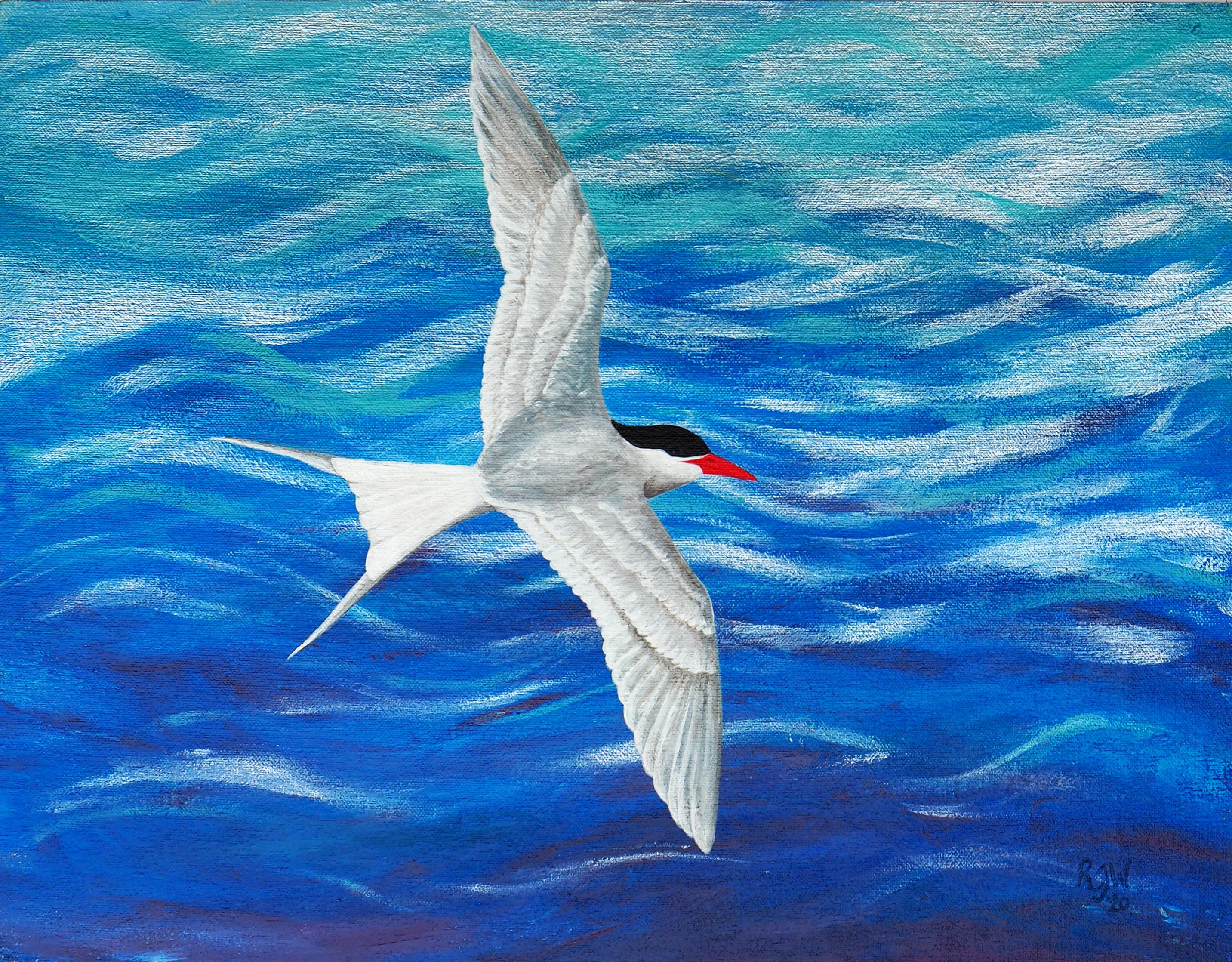 Tern at Sea