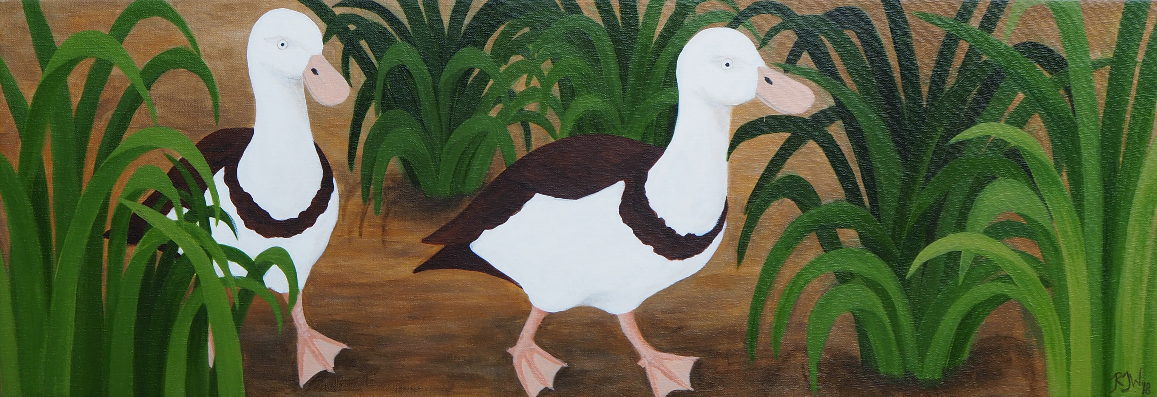 Rajah Shelducks