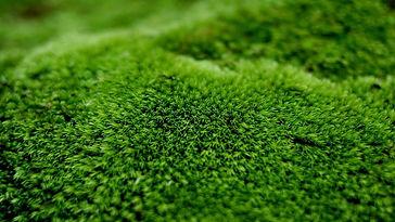 Surrey Lawn Services,  lawn care surrey, Surrey lawn care services, scarifying services in surrey, Surrey lawn care, lawn care services in surrey, lawn treatment services surrey, moss removal services surrey, lawn treatment services Guildford,  lawn care service Guildford, lawn treatment services Farnham,  lawn care service Farnham