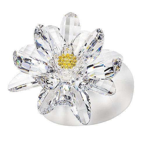 Lotus flower. 1010 71