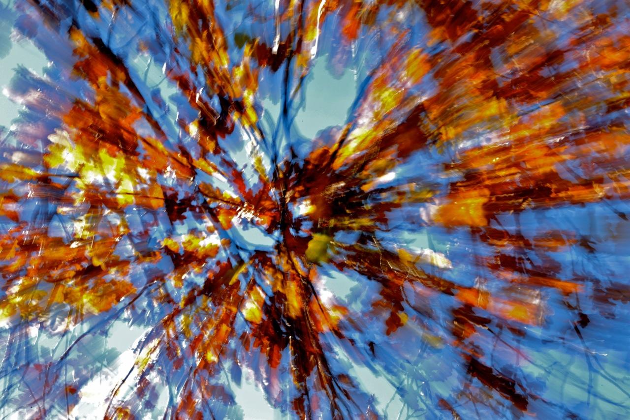 cielo tra le foglie
