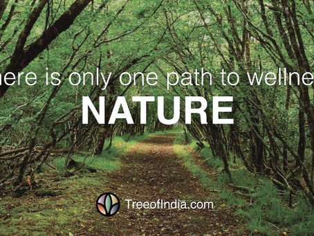 Stay Wild! Are You Getting Enough Time in Nature?